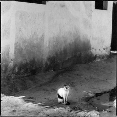 Cat, Lamu, Kenya