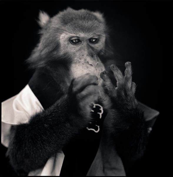 Kanpei Counting Fingers, Suo Sarumawashi