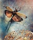 Orthoptera: Acrididae