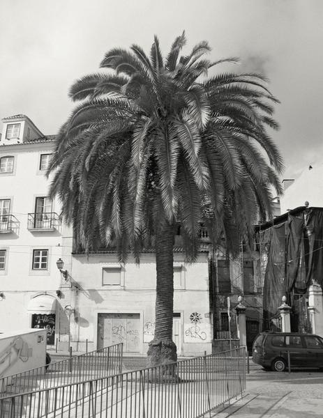 Der Baum, Lisbon