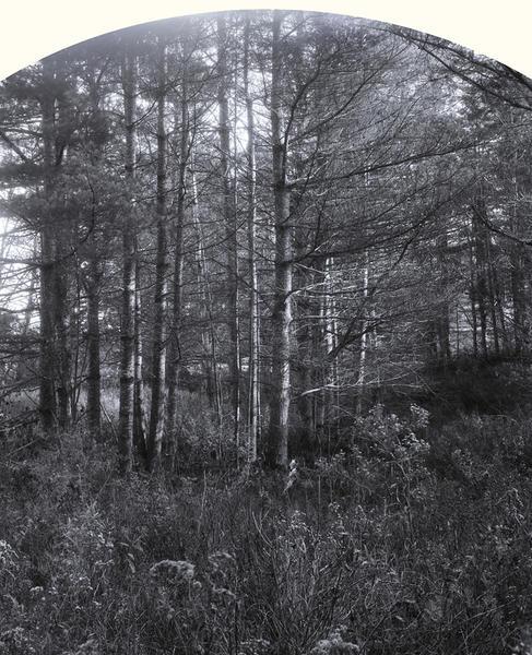 White Pines, Lunenburg, 2012