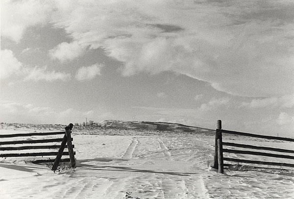 Cattle Guard, Winter Morning