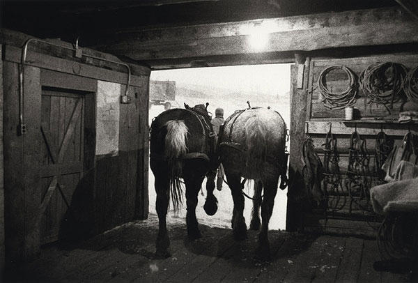 Leaving the Barn to Feed