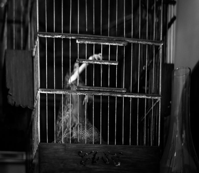 Dancer In Cage, Istanbul