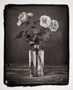 Roses, study no. 2
