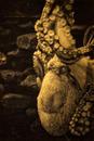 Microcosmus Marinus (Kraken)