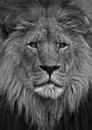 Lion, 2008