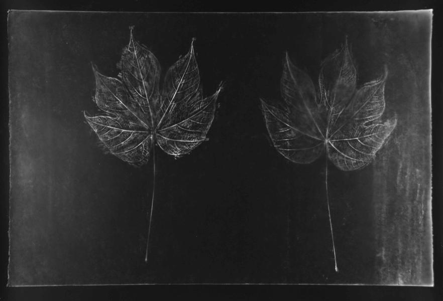 A-Bombed Leaf, Hiroshima, contact print of rubbing