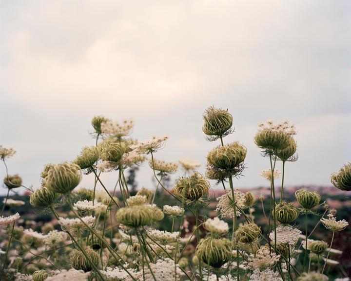 Magical Flora, 40 x 50 inches, c-print, 2011