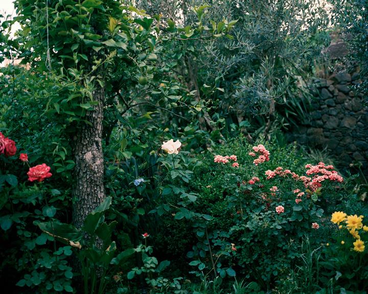Antonia's Garden, 24 x 30 inches, c-print, 2011