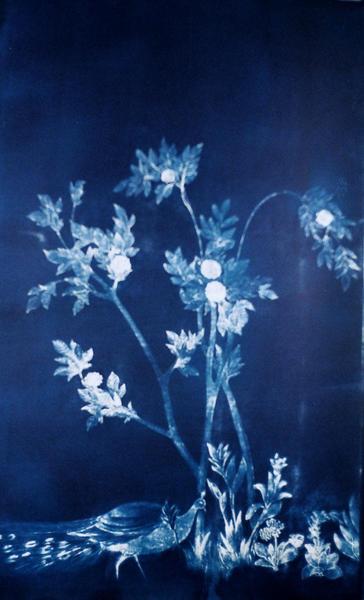 panel 1, Garden of Livia, tryptich cyanotype 2014
