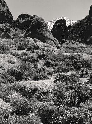 Afternoon Landscape, 1983