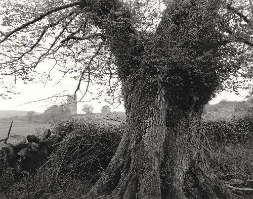 O'Dea Castle, 1986