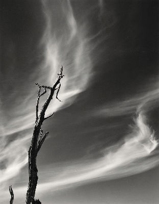 Mesquite and Clouds, 1981
