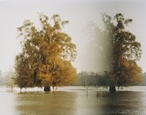 Disappearring Trees, Altamaha River, GA