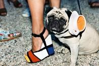 Mondrian Teacup Pug