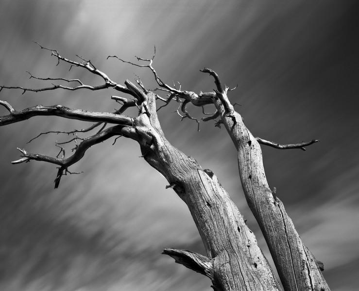 Deadwood 7
