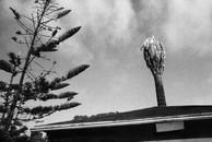 Dead Palm