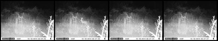 Night Survival Frames 1-4