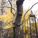 Tree, East 22nd Street
