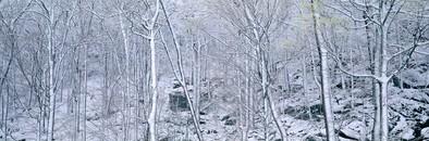 Raven Rocks Trees