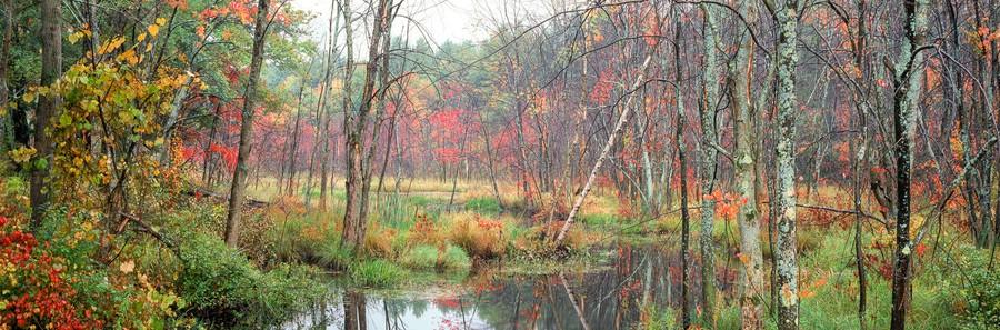 Shaker Hill Swamp