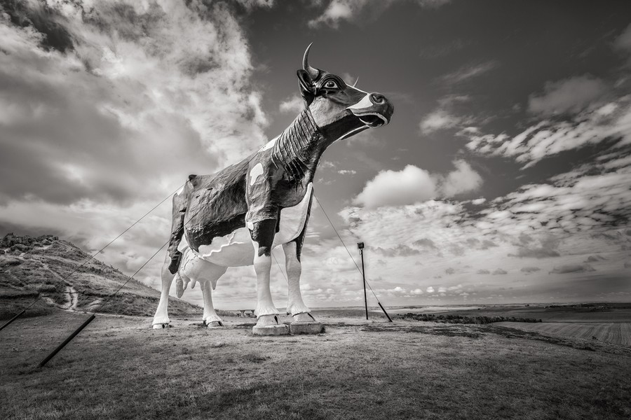 World's Largest Holstein Cow, New Salem, ND