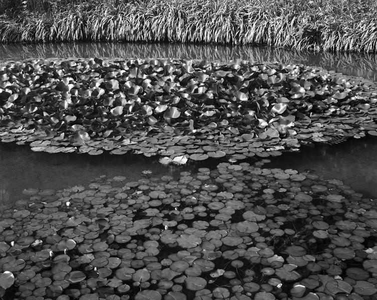 Pools Puddles & Ponds # 1 Niagara Falls ON