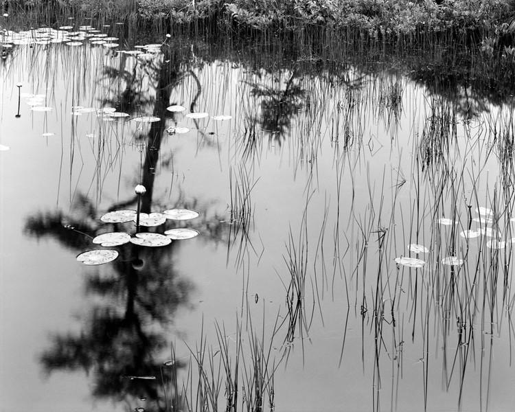 Pools Puddles & Ponds #12 Cape Breton NS