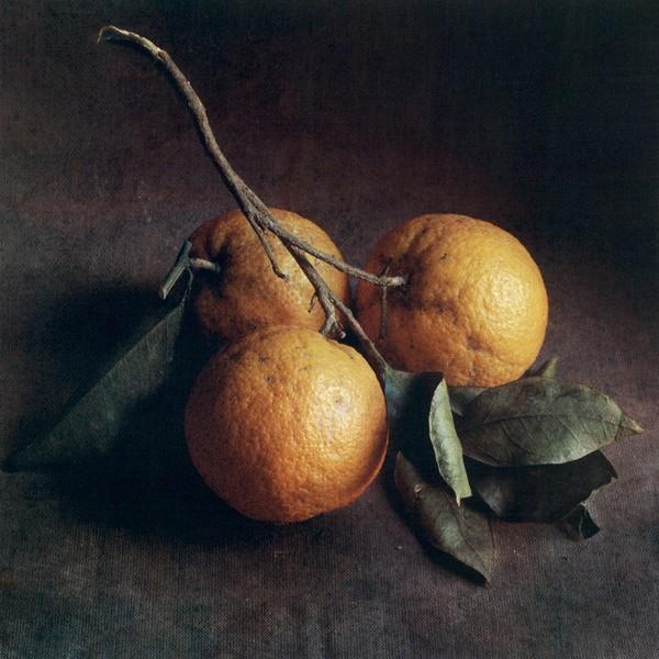 Autumn Oranges