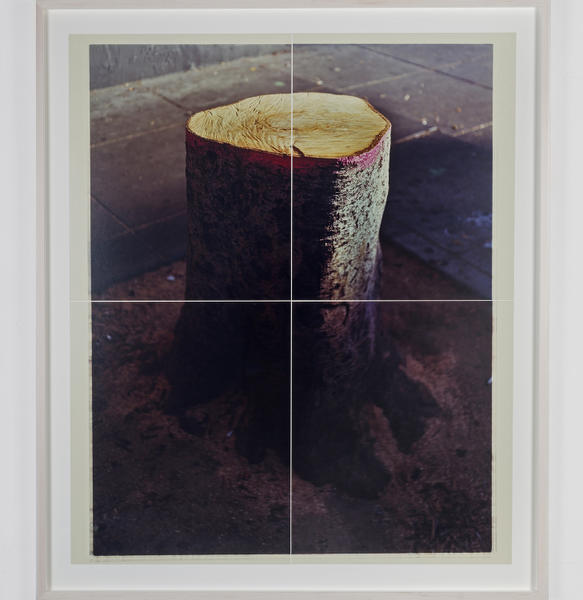 Untitled (Stump)
