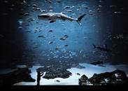 The Whale Shark Tank, Atlanta, GA