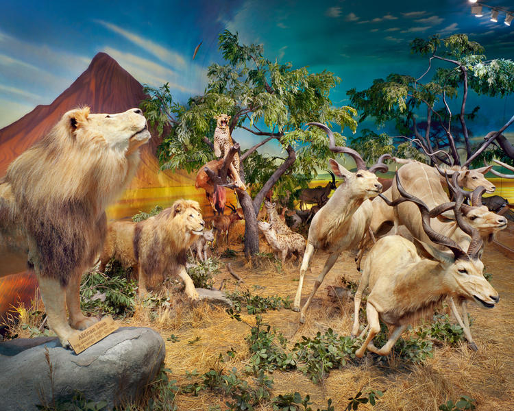 Lions, Leopards, and Antelope, Cabela's, PA
