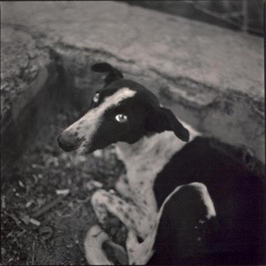 Dog, Nahargarh Fort, Jaipur, India