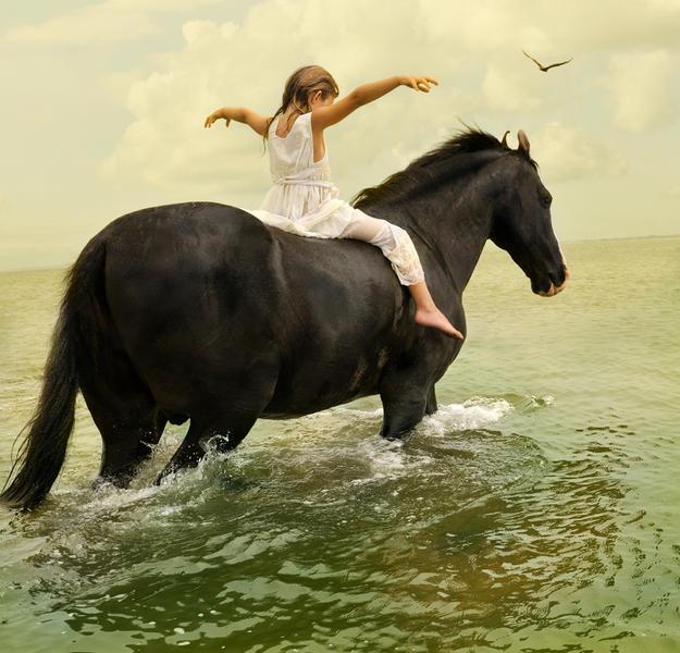 Marwari Stallion #1