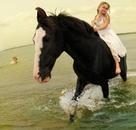 Marwari Stallion #2