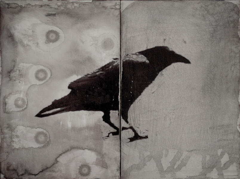 Crow Standing(with Spots)