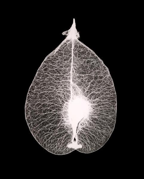 Seed Leaf