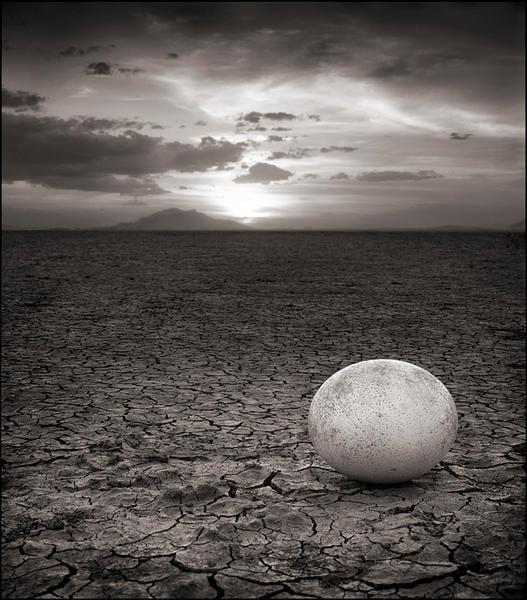 Abandoned Ostrich Egg, Amboseli 2007