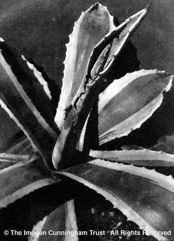 Agave 2, 1920s