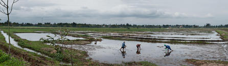 Rice Planters, Bien Hoa