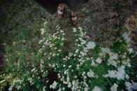 Wedding Flower Bush