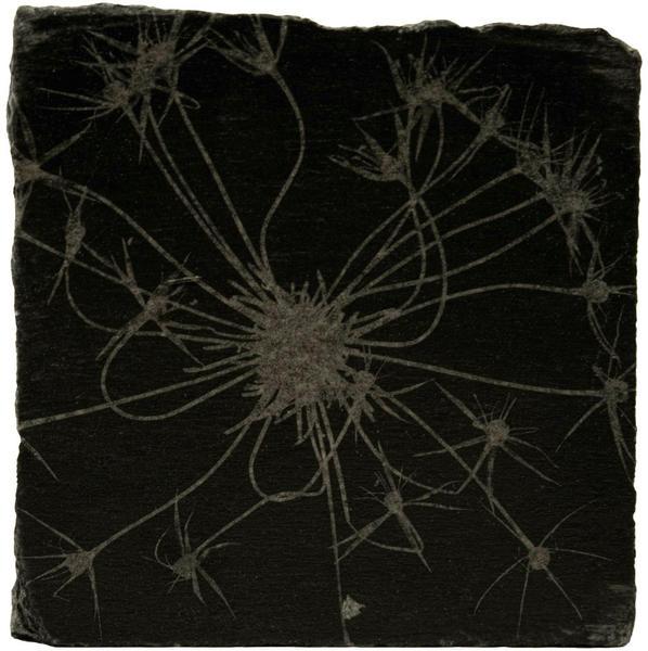 Allium III