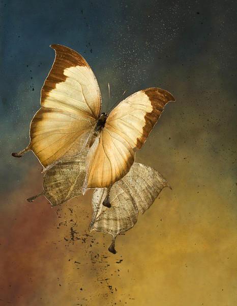 Nymphalidae: Charaxes