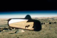 Rear View Mirror Buffalo, Pierre, South Dakota