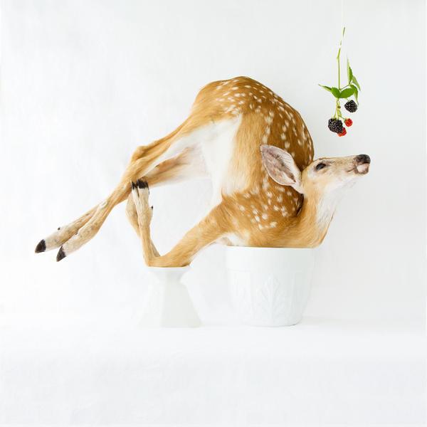 Wunderkammer:  Deer and Blackberries, 2013
