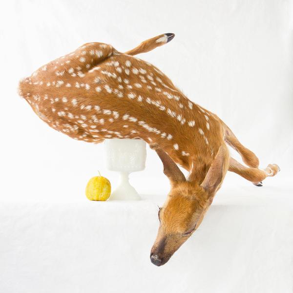 Wunderkammer:  Deer and Lemon Cucumber, 2012