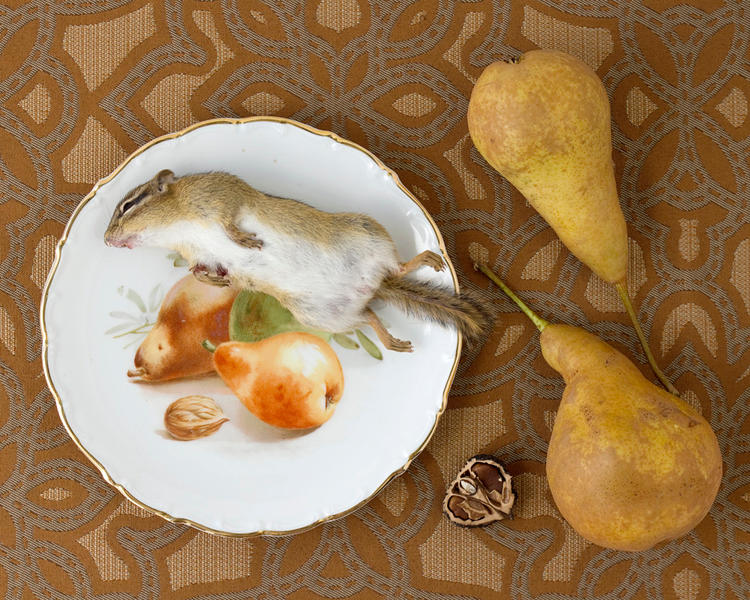 Still Life with Chipmunk and Pears, 2010