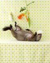 Still Life with Groundhog and Trumpet Vine, 2011