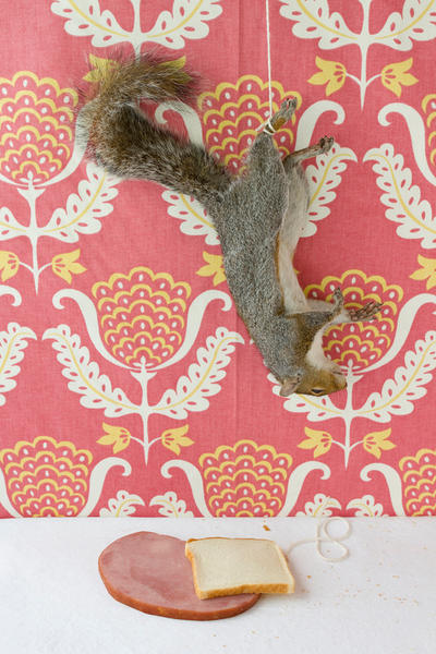 Still Life with Ham and Squirrel, 2010